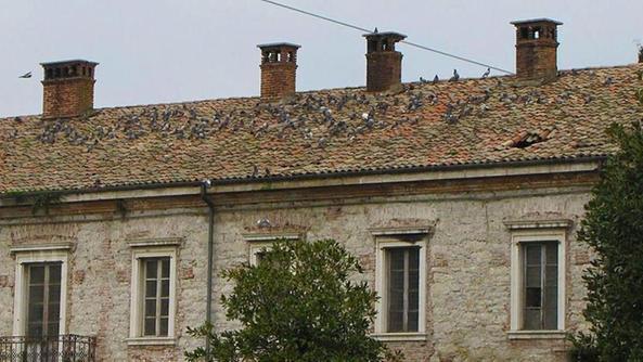 Sos il tetto del padiglione fa acqua garda baldo l 39 arena for Inquadratura del tetto del padiglione