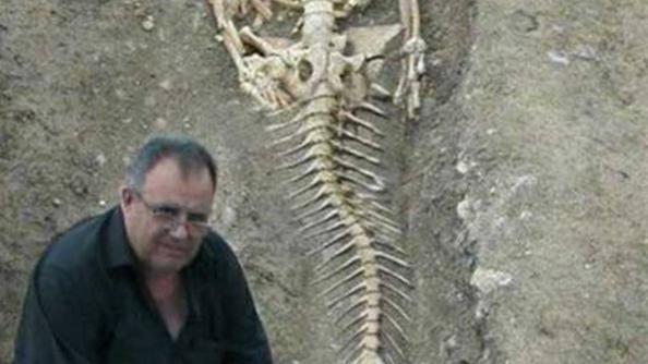 Foto l 39 archeo sirena una vera bufala fotonotizie - Immagini della vera sirena ...