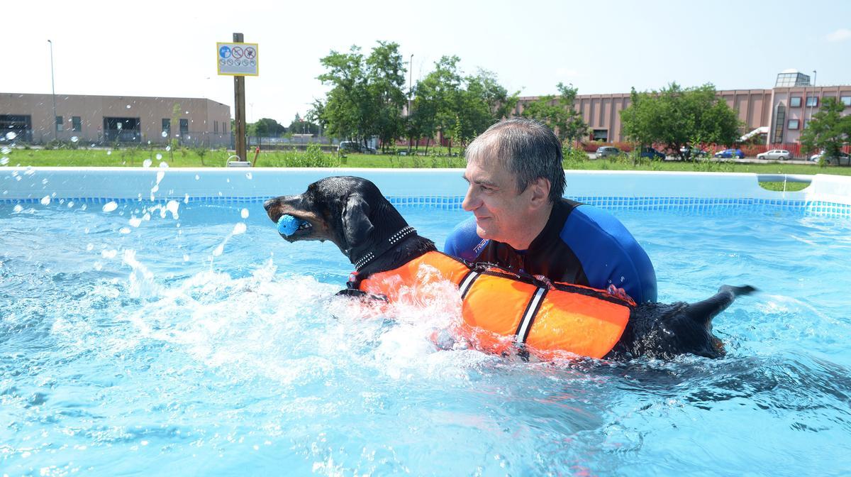 Una piscina per cani e i quattrozampe da oggi fanno splash for Piscina x cani milano