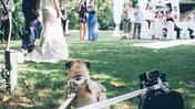 Due carline damigelle (www.weddingdogsitter.com)